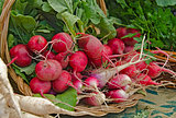 radish bunch in basket