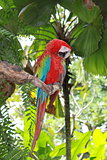 Parrot sitting on the branch
