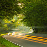 Speed - morning on the road in forest