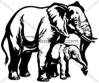 elephant with baby black white