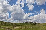 Herd of Andalusian sheep