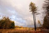 pine trees on landscape in Dwindelderveld