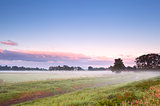 fog over summer meadow in sunrise