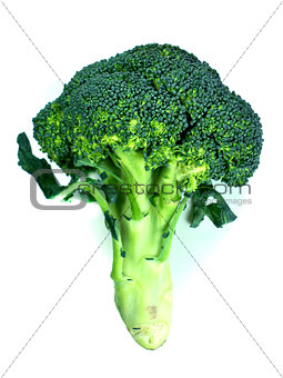 branches of cabbage of a broccoli
