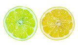 Fresh slice of Lemon