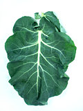 Leaf of a broccoli