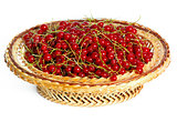 Many bunches of red currants in a basket