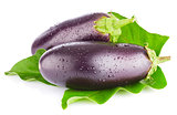 eggplant with green leaf