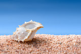 Seashell on a beach
