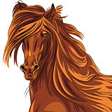 Vector closeup portrait of red horse