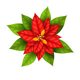 Christmas Star flower poinsettia isolated