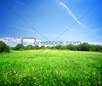 Bright meadow flowers