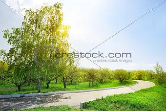 Asphalt road in the park