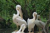 Singapore Bird Park Birds
