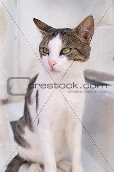 A cat in Mykonos