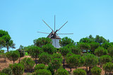 Windmill above a plantation of trees