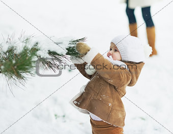 Baby playing with snow on branch