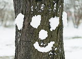 Tree with face made with snow