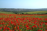 Poppy Field and Brighton