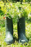 Boot Flowerpot in garden