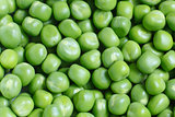 Many green peas as a texture