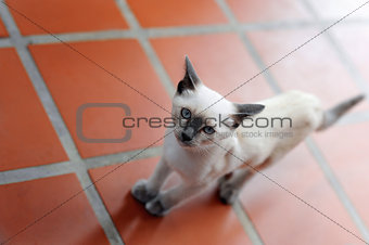 Cat stepping on the tiled floor