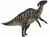 Parasaurolophus Striped on White