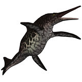 Shonisaurus Icthyosaur on White