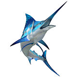 Marlin Fish on White