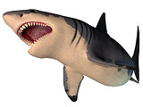 Megalodon Shark on White