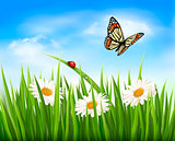 Nature background with green grass, flowers and a butterfly. Vec