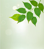 Nature background with green leaves. Vector illustrtion.