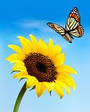Nature background with sunflower and butterfly. Vector illustrat