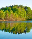 Forest on a Lake
