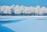 Winter xmas trees