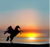 Vector pegasus on sunset sky