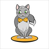 Gray cat with orange bow