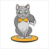 Gray cat with orange bow