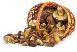 Wicker basket with yellow boletus mushrooms near.
