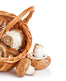 fresh mushrooms in a basket