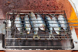 Fresh sardines on the grill