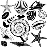 Shells collection. Vector set with seashells and starfish