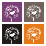 Vector white dandelion silhouette icon set on different, colorful backgrounds.
