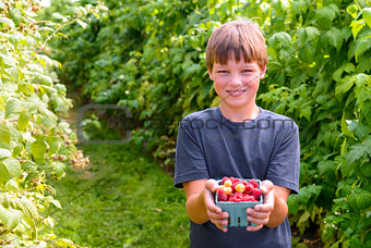 Boy showing freshly picked raspberries