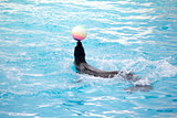 Seal with ball