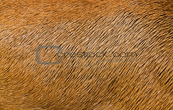 Animal Hair Texture