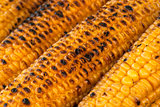 Roasted corn cobs