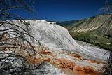 Mammoth Hot Springs Yellowstone Wyoming