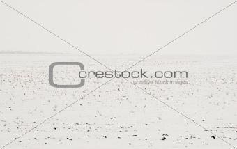 Prairie Winter Farmland