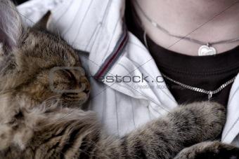 Kitten resting on chest